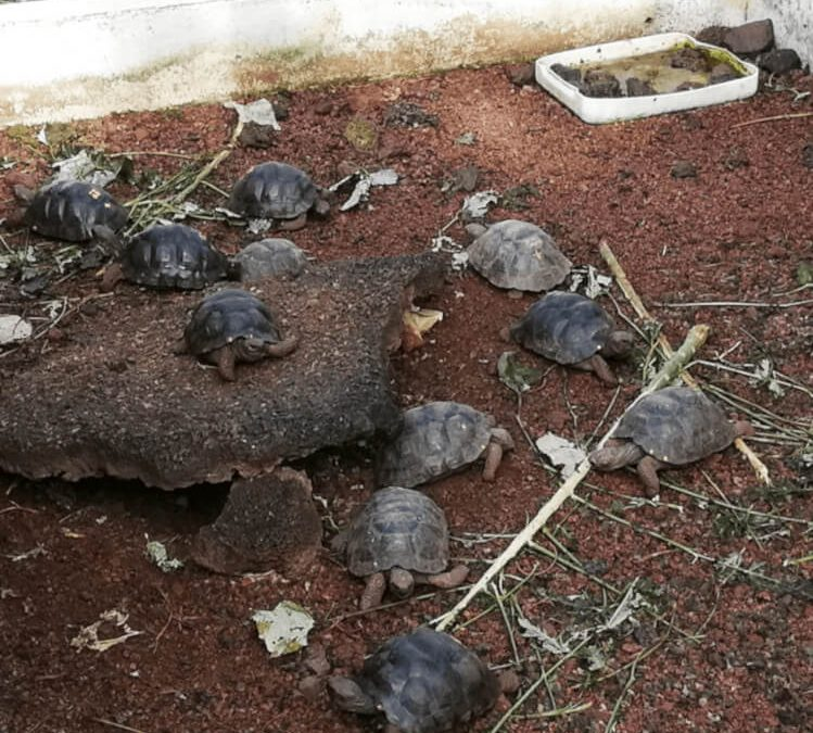 Giant turtles born after 100 years