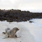 A paradise called Galápagos