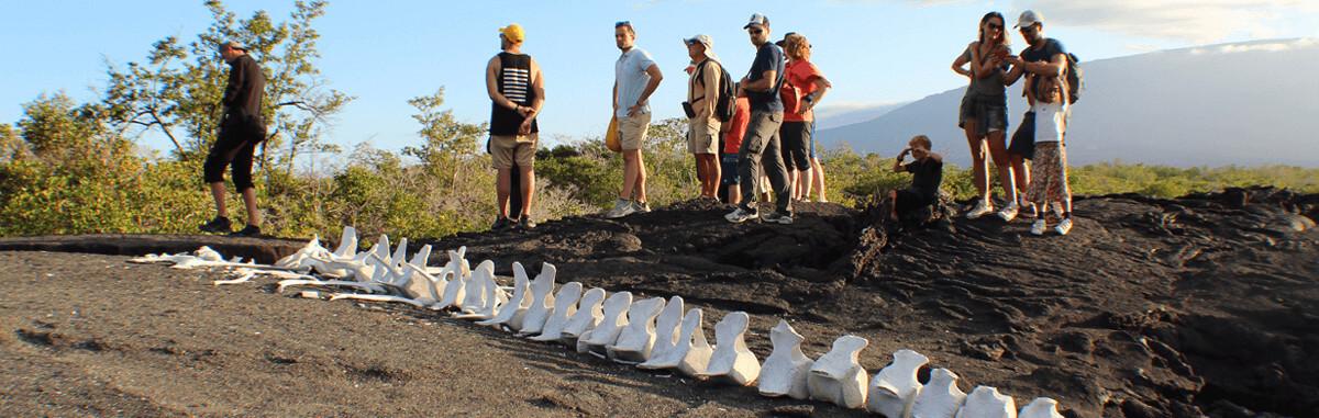 Galapagos Landscape 2