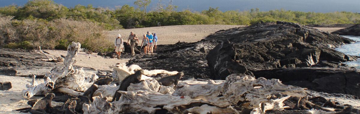 Galapagos Landscape 3