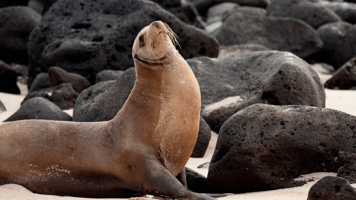Recommendations for travelling to the Galapagos Islands