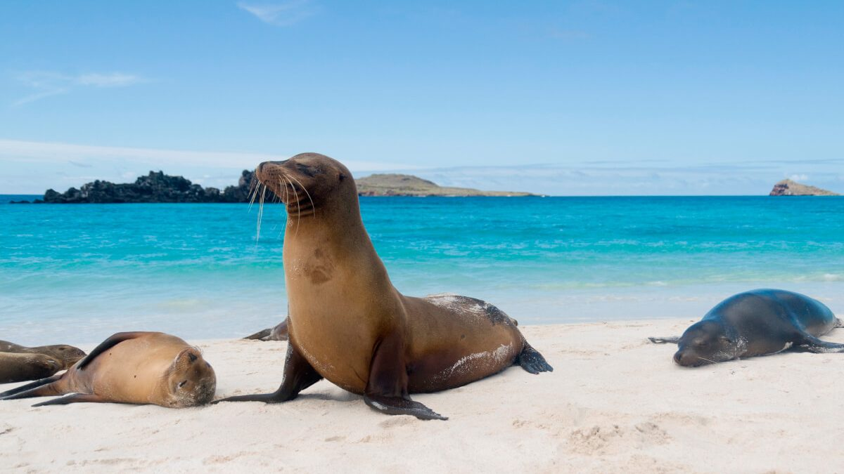 Your vacations in Galapagos and Fragata Yacht will be back soon