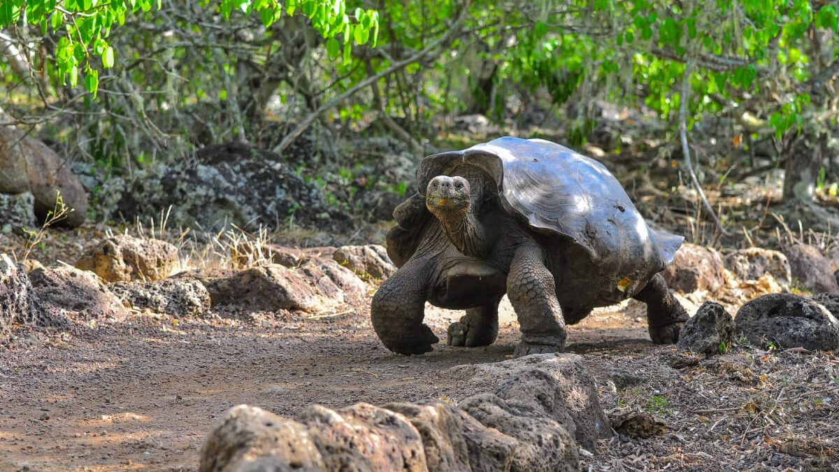 Animals Covid Galapagos