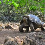 The wildlife in Galapagos amidst the COVID-19 pandemic