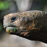 Tourism in Galapagos: A brief history